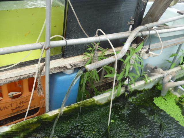 第一メダカハウスの循環水