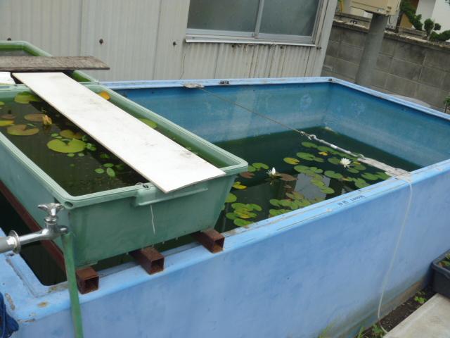 大型水槽の横にも井戸水の水道蛇口