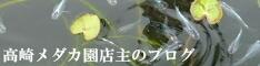 群馬のメダカ販売!高崎メダカ園の店主ブログ